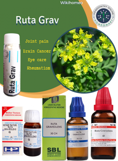 Ruta Graveolens Homeopathic Medicine Details Indicatons Benefits Etc